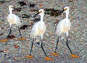 BIRDS-72